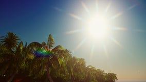 Paradisvegetation på tolkning för Hawaii ö 3d Royaltyfria Bilder