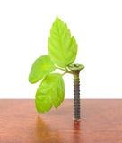 Parafuso com sprouts novos foto de stock