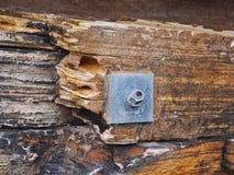 Parafuso da rocha que fixa Sydney Sandstone Wall, Austrália fotografia de stock