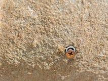 Parafuso na pedra Foto de Stock Royalty Free