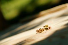 Parafusos nas pranchas de madeira Imagens de Stock