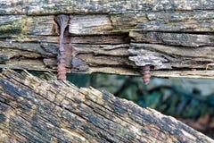 Parafusos oxidados Foto de Stock