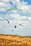 Paraglide. And birds on a blue sky with clouds Stock Image