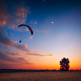 Paraglide in a sunset sky. Above the wheat field with lonely tree Stock Photography