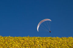 Paraglider. In a blue sky Stock Photos