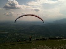 Paraglider with Cows Royalty Free Stock Image