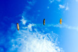 Paragliding at Ninh Thuan province Stock Images