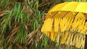 Paraguas, bambú y viento almacen de metraje de vídeo