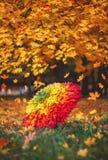 Paraguas de hojas de arce Otoño Arco iris de hojas gradiente fotografía de archivo libre de regalías