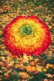 Paraguas de hojas de arce Otoño Arco iris de hojas gradiente fotografía de archivo