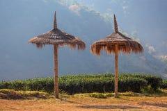 Paraguas de la hierba en la plantación de té Foto de archivo