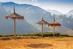 Paraguas de la hierba en la plantación de té Fotos de archivo libres de regalías