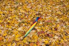 Paraguas en las hojas caidas Fotografía de archivo libre de regalías