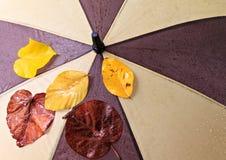 Paraguas mojado Imágenes de archivo libres de regalías