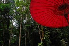 Paraguas rojo en la selva Imagen de archivo