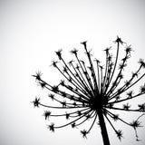 Paraguas salvaje de la hierba del vector Imagen de archivo libre de regalías
