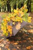 Paraguas y hojas Fotografía de archivo libre de regalías