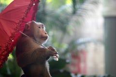 Paraguas y mono Fotografía de archivo