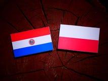 Paraguay flag with Polish flag on a tree stump isolated. Paraguay flag with Polish flag on a tree stump royalty free illustration