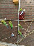 parakeet stockfotografie