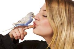 Parakeet amigável Fotografia de Stock Royalty Free