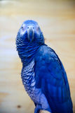 Parakeet collection stock images