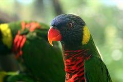 parakeet czujny fotografia stock