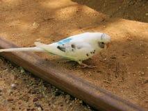 Parakeet przy zoo Zdjęcia Royalty Free