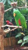 parakeets Photo stock