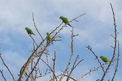 Parakeets. A group of birds called parakkets royalty free stock photography