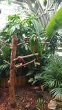 Parakeets on Tree Stump royalty free stock photo