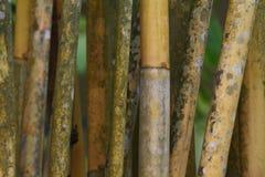Paralela zieleni i żółci bambusowi bagażniki obrazy royalty free