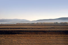 Parallel bands of agricultural fields at dawn Royalty Free Stock Photo