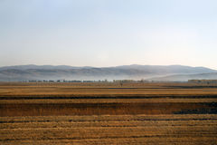 Parallel bands of agricultural fields at dawn Stock Image