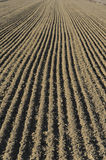 Parallel lines of a cultivated field. The parallel lines of a cultivated field Royalty Free Stock Photo