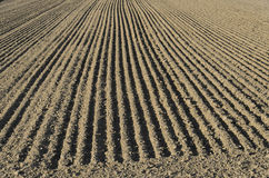 Parallel lines of a sown field. The parallel lines of a sown field Stock Images