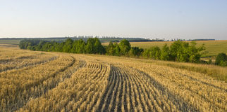 Parallel. Special stripy patterns of the field after the harvest Stock Image
