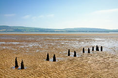 Parallel wooden posts in Morecambe Bay Royalty Free Stock Image