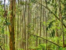 Parallele Bäume asturias spanien Lizenzfreies Stockfoto