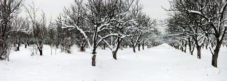 Parallele Reihen im schneebedeckten Obstgarten Stockbilder