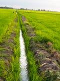 Parallele Weise auf dem grünen Reis-Gebiet Lizenzfreie Stockfotografie