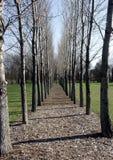 Parallelle Bomen Royalty-vrije Stock Foto