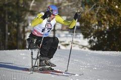 Paralympics сидит гонщик лыжи Стоковое фото RF