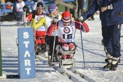 Paralympics сидит лыжник Стоковая Фотография