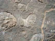 Paramecium fossil in the rock Stock Photo