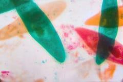 Parameciumcaudatum under mikroskopet - abstrakt begrepp formar i Co Royaltyfria Foton
