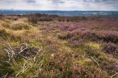 Paramera del brezo Imagen de archivo