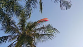 Parameter over coconut tree under blue sky Stock Image