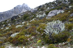 Paramo. In Venezuelan Andes along a path from teleferico Royalty Free Stock Photo