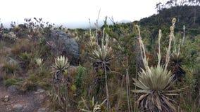 ¡Paramo de Bogotà del paisaje imagen de archivo libre de regalías